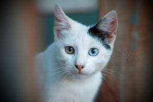Look Me In The eYeS by FreeSpiritFotography