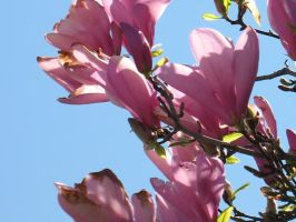 Flowering Tree - Pink by Jyl22075