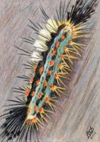Tussock Moth Caterpillar by Wolf-Daughter