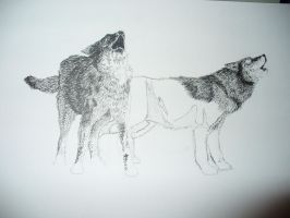 wolf pic im working on by Silver-Wolf-19