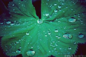 Drops of Rain by this-is-the-life2905