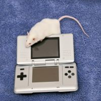 Nintendo Mouse I by LDFranklin