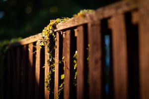 Fence Wallpaper by bloknayrb