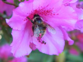 Busy Bee by rpatersonphotos