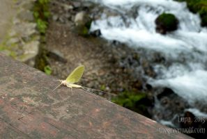 Mayfly by lupagreenwolf