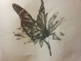 Butterfly by SaraPalma
