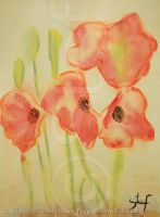 Poppies (2012) by stefonthesea