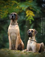 Two Proud Dogs by A-Motive