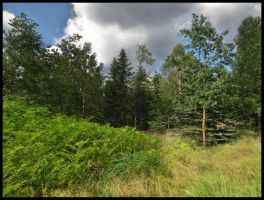 Forest between Tisa and Ostrov by Pildik