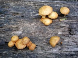 Costa Rica - Mushrooms by Amska