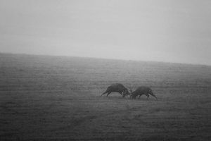 Fight in the mist by JMrocek
