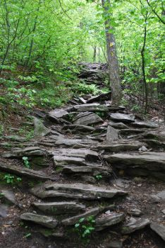 Rocky Forest Trail by CompassLogicStock
