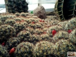 Cactus meadow by COREnick