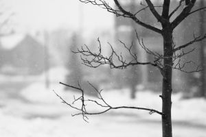Cold Winter Day by NourhanB