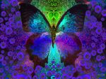 Baldry's butterfly by rabbitica