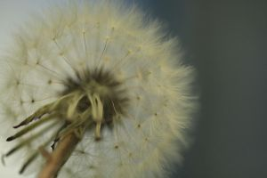 Wishes in Close Up by Coraloralyn