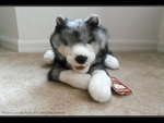 .: Folkmanis Wolf Plush | Treasure Find :. by Dunkin-Prime