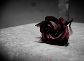 Steel Rose by Sudlice