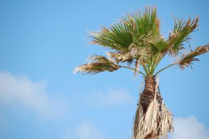 Wow, a palm tree by YouTheWho