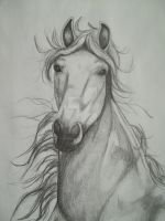 Horse Head Sketch by NewfieArtGirl