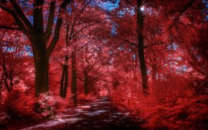 Infrared Trees - pt. VIII by myINQI