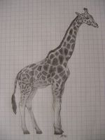 MY AWSOME GIRAFFE by DEATHxWISH143