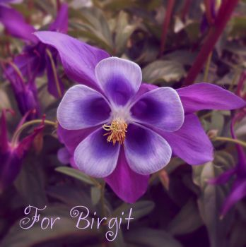 For Birgit by Sisterslaughter165