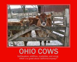 Ohio Cows by LDLAWRENCE