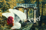 Angel by chaneldreams