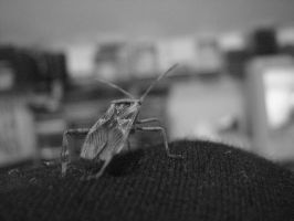 Insect by CodyStuck
