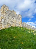 Spring Walls 3 by Queenselphie