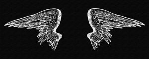 Wings by privatepino