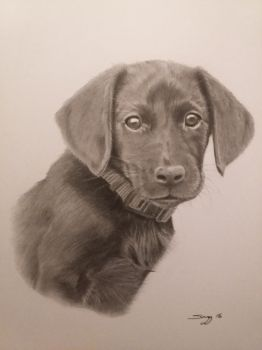 Puppy drawn in pencil and charcoal by SARGY001