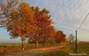 Hungarian landscapes. hHDR-picture. by magyarilaszlo
