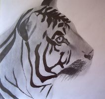 Tiger by thaismonfre