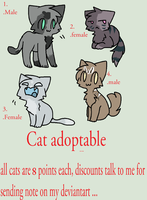 OPEN-Cat adoptables-OPEN by danituco