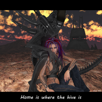 Home is where the Hive is by moonwolf-95