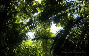 Palm Tree Canopy by angiers