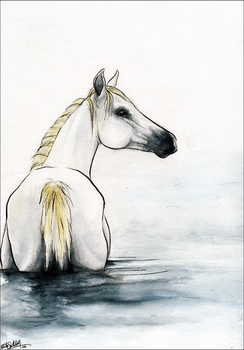 .:Water Horse:. by WhiteSpiritWolf