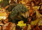 Hedgehog by AmBr0