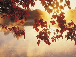 autumn mist at sunrise by hersheyxox