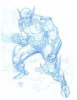 Wolverine Sketch: Blue by Darry