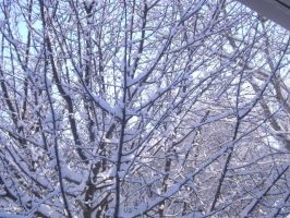 Snow in the Branches 1 by Magoo-Tora