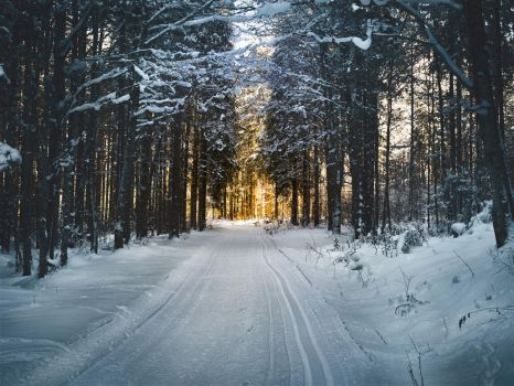 Cross country skiing towards the sun. by 8moments