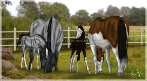 The newest foals by Jullelin