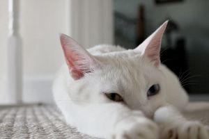 white cat in color 7 by bobbyfufu