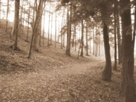 Winter  Woodland Untitled 1 by Carrie-AnneSevenfold