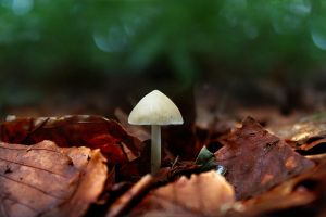 little mushroom -  alone in the forest by hv1234