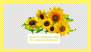 Sunflowers.PNG by jungchanpark by justblackssi