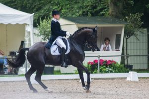 Dressage Stock - XXI by Summerly